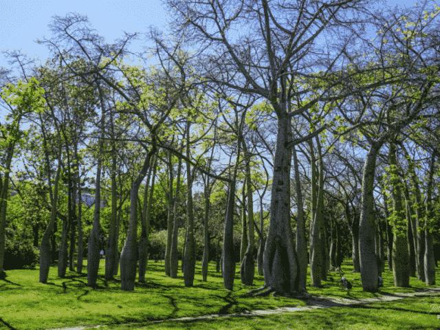Les arbres, ces êtres intelligents et précieux