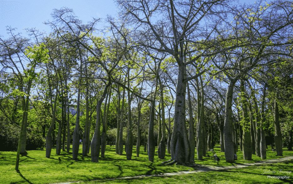 Intelligence des arbres - Les fées de la cosncience