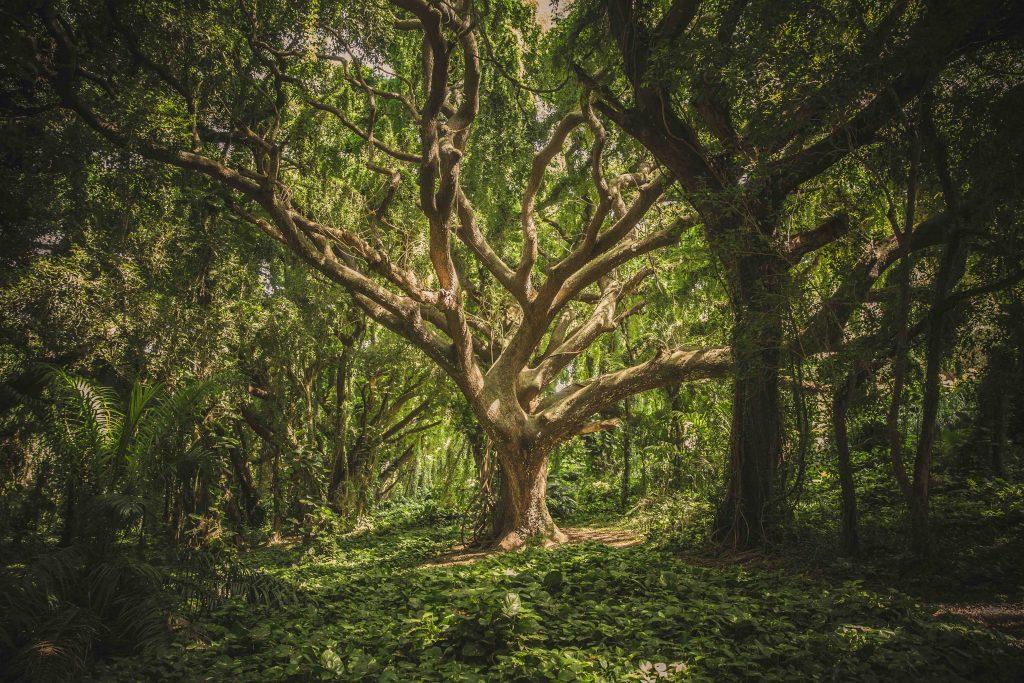 êtres de la nature forêt